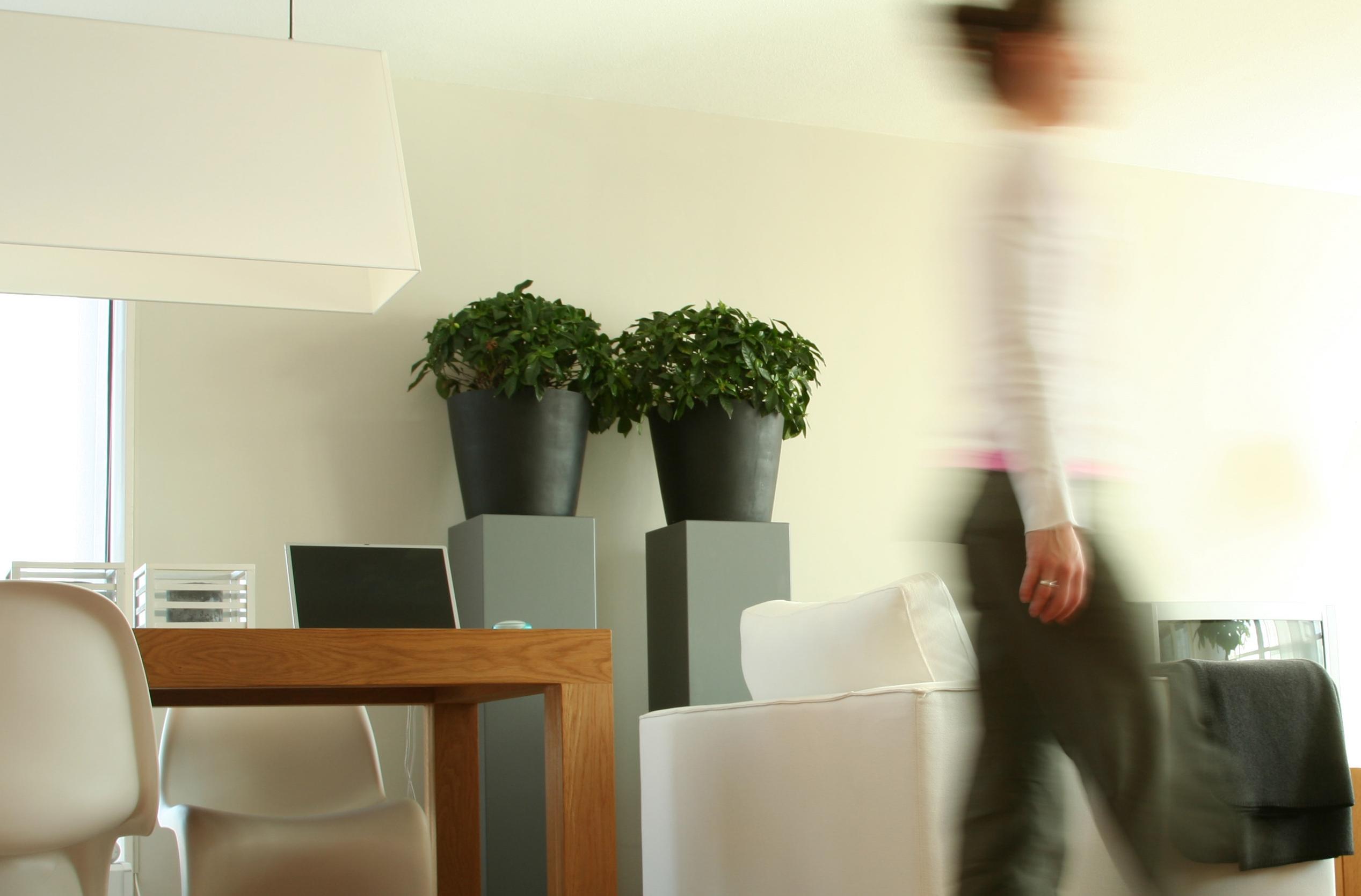 De juiste plant kiezen voor je woonkamer - 123INTERIEURBLOG